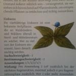 Weltbeschreibung 03 Pflanzen